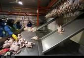 کمبود مرغ در استان چهارمحال و بختیاری به دلیل خروج از استان است