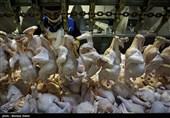 استاندار قزوین: گرانفروشی و کمفروشی مرغ پذیرفته نیست / ورود تعزیرات به بازار مرغ اجباری شد