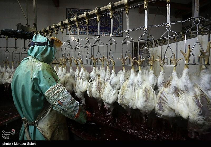 بازار مرغ سیستان و بلوچستان تا پیش ماه رمضان باید به ثبات برسد