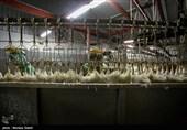 28 تن مرغ احتکار شده در مازندران کشف شد