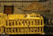 پرونده میلیاردی گرانفروشی مرغ در مازندران تشکیل شد