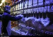 46 تن مرغ خارج از شبکه در مازندران کشف شد 