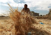 تسهیلاتی برای رونق بخش کشاورزی و گردشگری به روستائیان بروجرد پرداخت شود