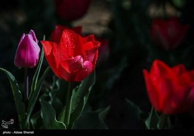 باغ گلها - البرز