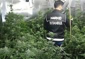 رکورد جهانی استانبول در اعتیاد به مواد مخدر