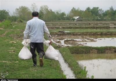 عضو مجمع نمایندگان گیلان: دولت برای تأمین سم و کود کشاورزی از محل هدفمندی یارانهها به کشاورزان سوبسید بدهد