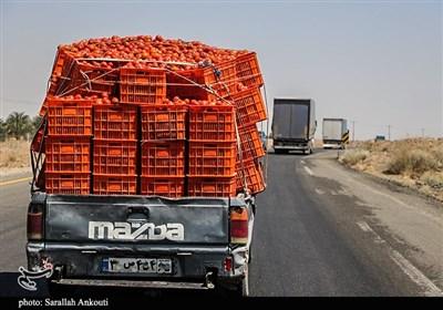 گوجهفرنگی هم از سفره زنجانیها پر کشید/ کاهش تولید و قیمت نهادهها دو متهم اصلی