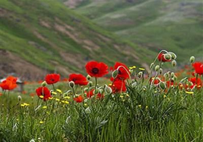 ۴۰۰ گونه نادر از گلهای وحشی دنیا در ایران/ خواص گلهای وحشی را بشناسید