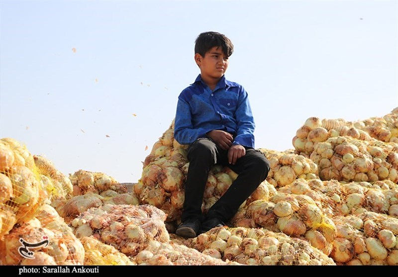 استان کرمان , کشاورزی ,