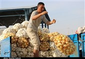 برخورد قاطع سپاه با دلالان بازار محصولات کشاورزی در هرمزگان / کشاورزان باید به میزان دسترنج خود سود ببرند