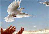 110میلیارد تومان برای آزادی 147 زندانی جرایم غیرعمد استان بوشهر هزینه شد