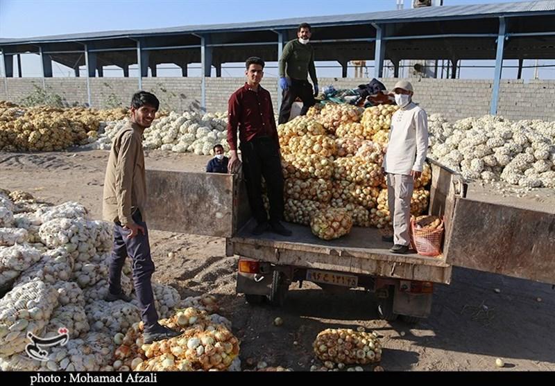 تلاش گروههای جهادی برای جلوگیری از هدررفت محصول پیازکاران جنوب استان کرمان+ تصاویر