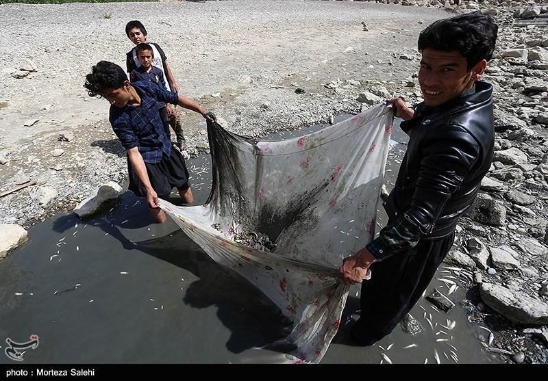 مرگ هزاران ماهی در زاینده روداصفهان