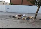 واکنش شهرداری سنندج به گزارش تسنیم؛ طرح فرهنگسازی جمعآوری زباله را اجرا میکنیم