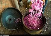 صادرات گلاب کاشان در پیچ و خم بیمهری/مشکلات رمق تولیدکنندگان را گرفته است