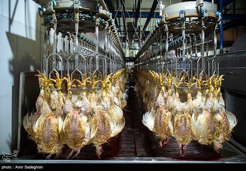 واردات هفتگی 3 تا 5 میلیون تخم مرغ نطفه دار گوشتی/ مرغ مهره ماه ارزان میشود