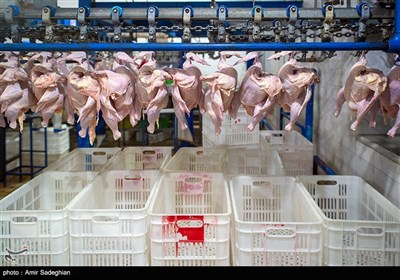دادستان همدان: تیم ویژه بازرسی برای بررسی وضعیت مرغ تشکیل میشود
