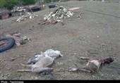 خسارت سنگین تگرگ به دامداران و باغداران کوهشاه/800 راس دام تلف و خطوط انتقال آب از بین رفت+تصاویر