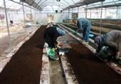 21 میلیارد ریال سود خالص سرای نوآوری کشت و تجاریسازی گیاهان زینتی در سال 99