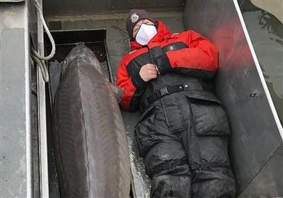 صید ماهی خاویار بزرگ با عمر ۱۰۰ سال در آمریکا!