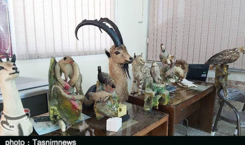 کشف ۱۲ حیوان تاکسیدرمی شده از منزل یک شکارچی غیرمجاز