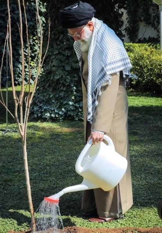 «معجزه آبخیزداری»|نهی مقام معظم رهبری از غرس درختان مضر/ درختان غیرمثمر چگونه باعث وقوع سیل می شوند؟