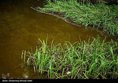 پیرامون دریاچه را جنگلهای پهنبرگ فرا گرفته که در بهار رویشگاه گل بنفشه و الزی (پیازچهٔ وحشی) و گونههای سبزیهای خوش رایحه و داروئی میباشد. در تابستان رودخانهای که در آنسوی دریاچه روانست آبی گوارا برای نوشیدن تأمین میکند. در پائیز درختچههای ازگیل و ولیک و تلکا محصول میدهند. در فصل زمستان محل سکونت اردکهای وحشی میباشد و سالهای اخیر با رهاسازی ماهی در این دریاچه کاربردهای آن افزایش پیدا کردهاست.درختهای مهمی به نام راش ، ممرز ، بلوط ، ملچ و نمدار پیرامون این دریاچه را فرا گرفتهاند که از نظر زیبایی اهمیت بهسزایی دارند.