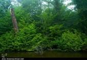 کاداستر اراضی ملی و منابع طبیعی طی 1 سال 2 برابر شد/ لزوم تداوم اصلاحات در سازمان امور جنگلها