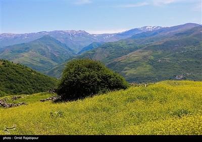 طبیعت بهاری اشکورات گیلان