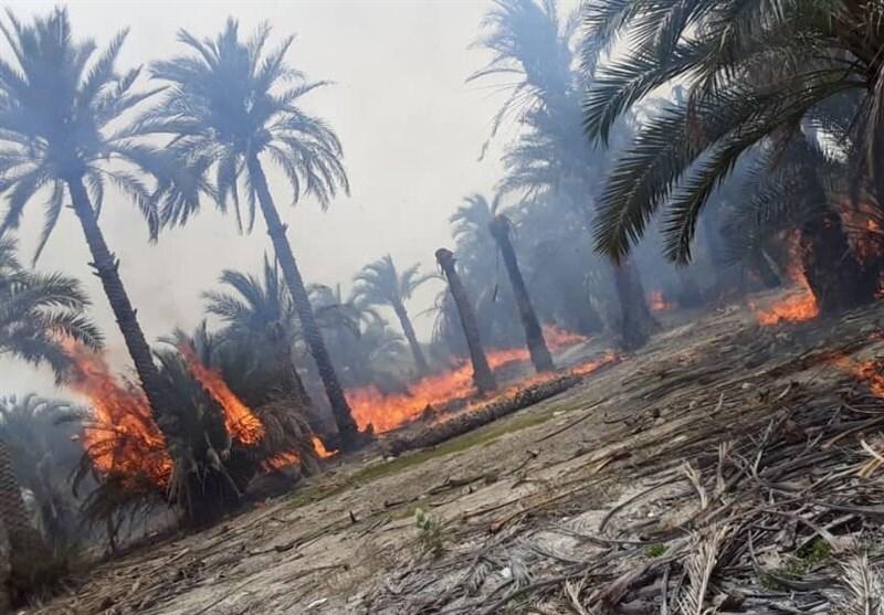 آتشسوزی در نخلستان و نیزارهای جاده قدیم اهواز ـ خرمشهر/ 100 نخل خرما در آتش سوخت