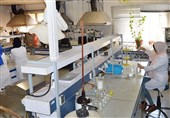 """موفقیت محققان کشور در تولید """"بذر ایرانی هویج"""" با 2 برابر بازده محصول"""