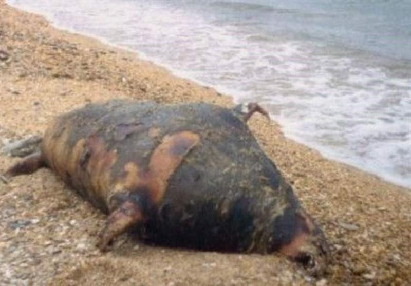کشف لاشه 170 فک خزری در سواحل روسیه!