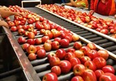 بومیسازی دستگاه سورتر محصولات کشاورزی توسط یک شرکت دانشبنیان کشور