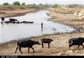 استاندار خوزستان: کشاورزان آسیب دیده 12 هزار میلیارد ریال خسارت دریافت میکنند