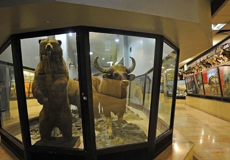 موزههای تاریخ طبیعی محلی برای آشتی با ارزشهای تنوع زیستی