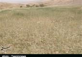 200 میلیارد تومان برای کاهش تنش آبی استان خوزستان اختصاص یافت