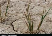خشکسالی و خطر ایجاد فروچاله در دشتهای استان کرمانشاه/ راهی جز مصرف بهینه آب نداریم