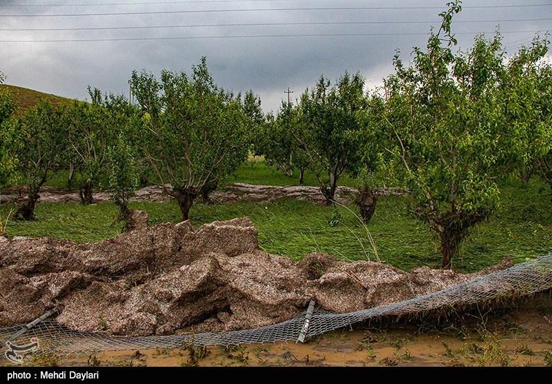 سیل بیش از 11 میلیارد تومان به بخش کشاورزی شهرستان خنج خسارت وارد کرد