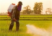 موفقیت دانشمند ایرانی در تولید داروی گیاهی و ارگانیک برای دفع جوندگان زمینهای زراعی