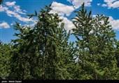 بایدها و نبایدهای دادستان همدان برای حراست از باغات/ چرا نباید حرفی از آن بافت سنتی کوچه باغها زد؟