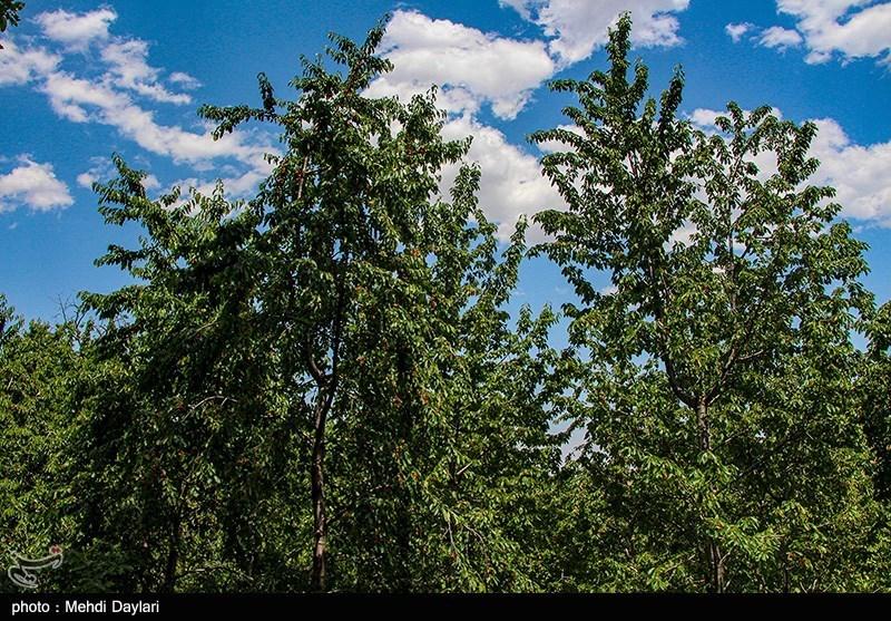 شعبدهبازی شورای شهر تهران برای تبدیل یک باغ در نیاوران به مسکونی!