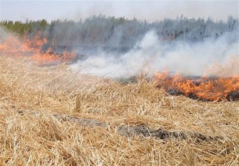 جریمه 8 میلیون تومانی برای عامل آتش زدن اراضی کشاورزی