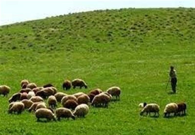 برخورد محیط زیست با متخلفان چرای غیرمجاز در منطقه حفاظت شده البرز جنوبی
