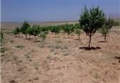 تنش آبی و کاهش 25 درصدی محصولات باغی در استان لرستان/ معیشت کشاورزان را دریابیم