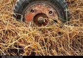 سه گانه گندم، آرد و نان با فعالیت 1200 واحد خبازی در استان خراسان شمالی چه ارتباطی دارد؟