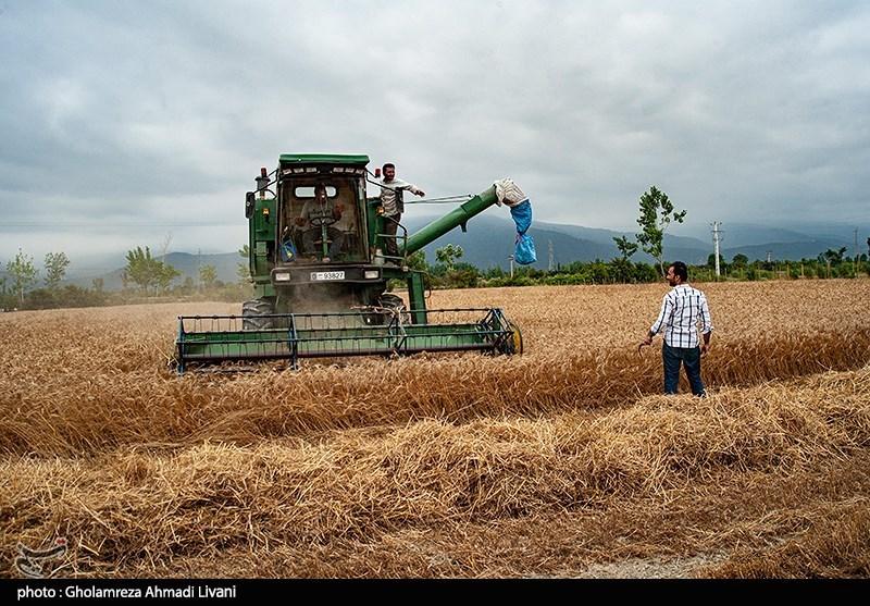 «معجزه آبخیزداری»|توصیه های آبخیزداری برای افزایش تولید گندم دیم