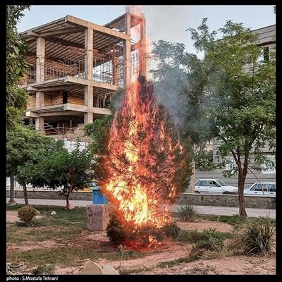 آتش گرفتن درخت کنار بلوار در اثر بی احتیاطی