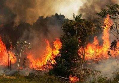 آتش به جان جنگلهای شرق گلستان افتاد/ اعزام نیروهای منابع طبیعی و مردمی به منطقه