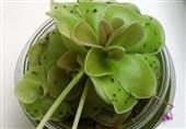 5 راهکار برای از بین بردن پشه سیاه گلدان