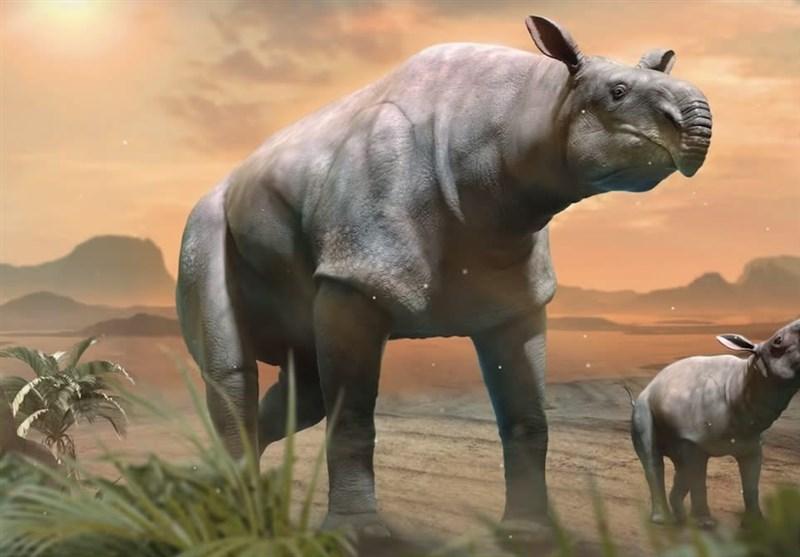 کشف بقایای کرگدن عظیم الجثه 22 میلیون ساله در چین + تصاویر